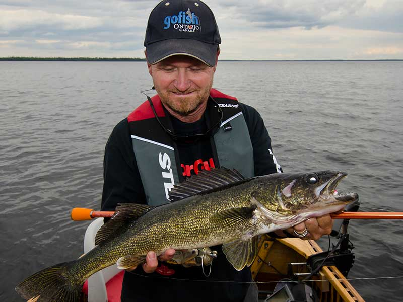walleye-feature-photo